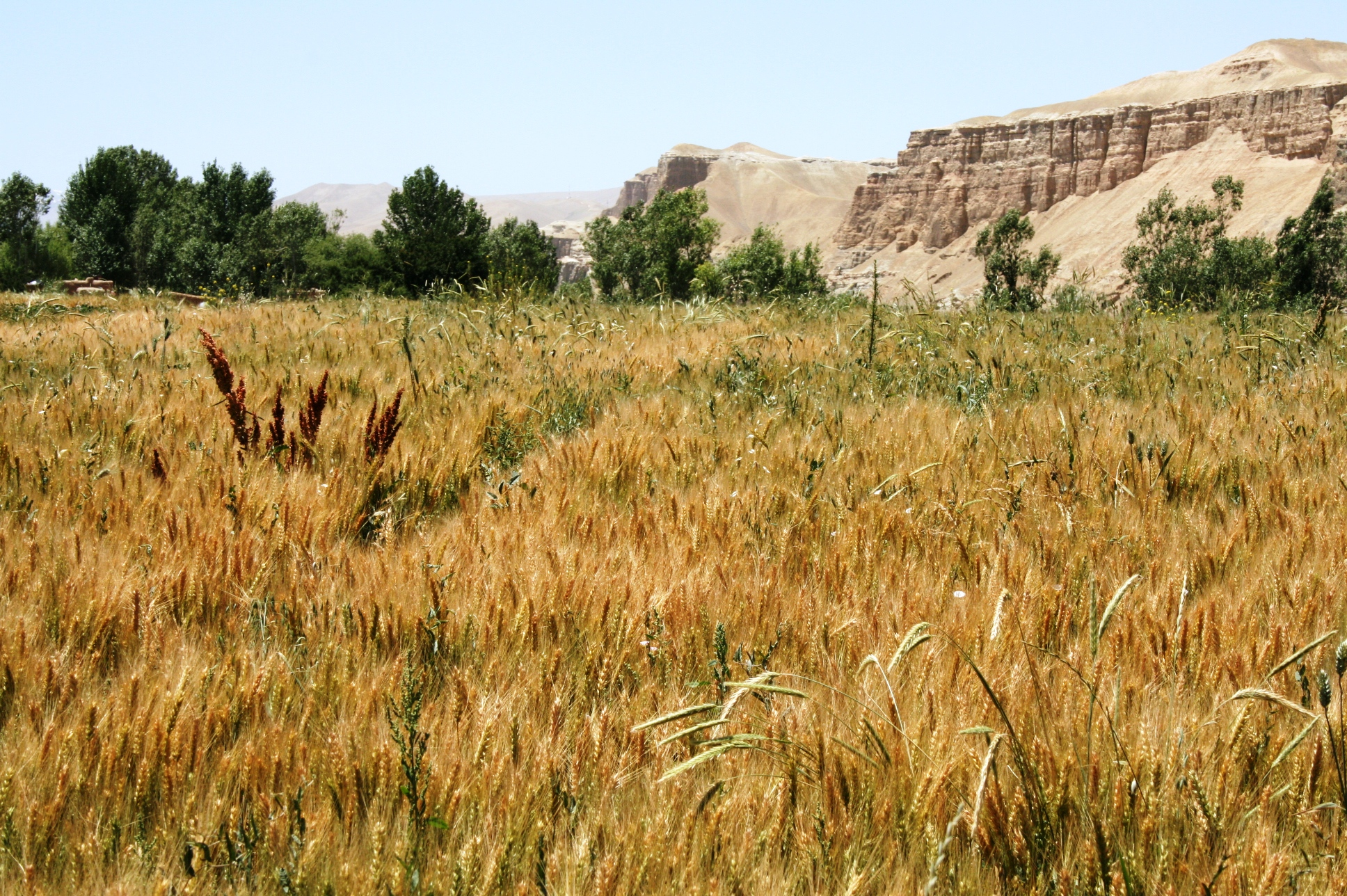 Afghanistan faces a wheat defict of over 700,000 tons in 2010