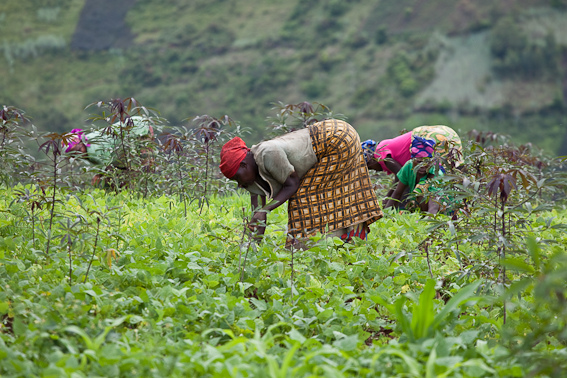 Villagers in Bukavu, South Kivu farm their land. FDLR, Refugees, conflict. For generic use