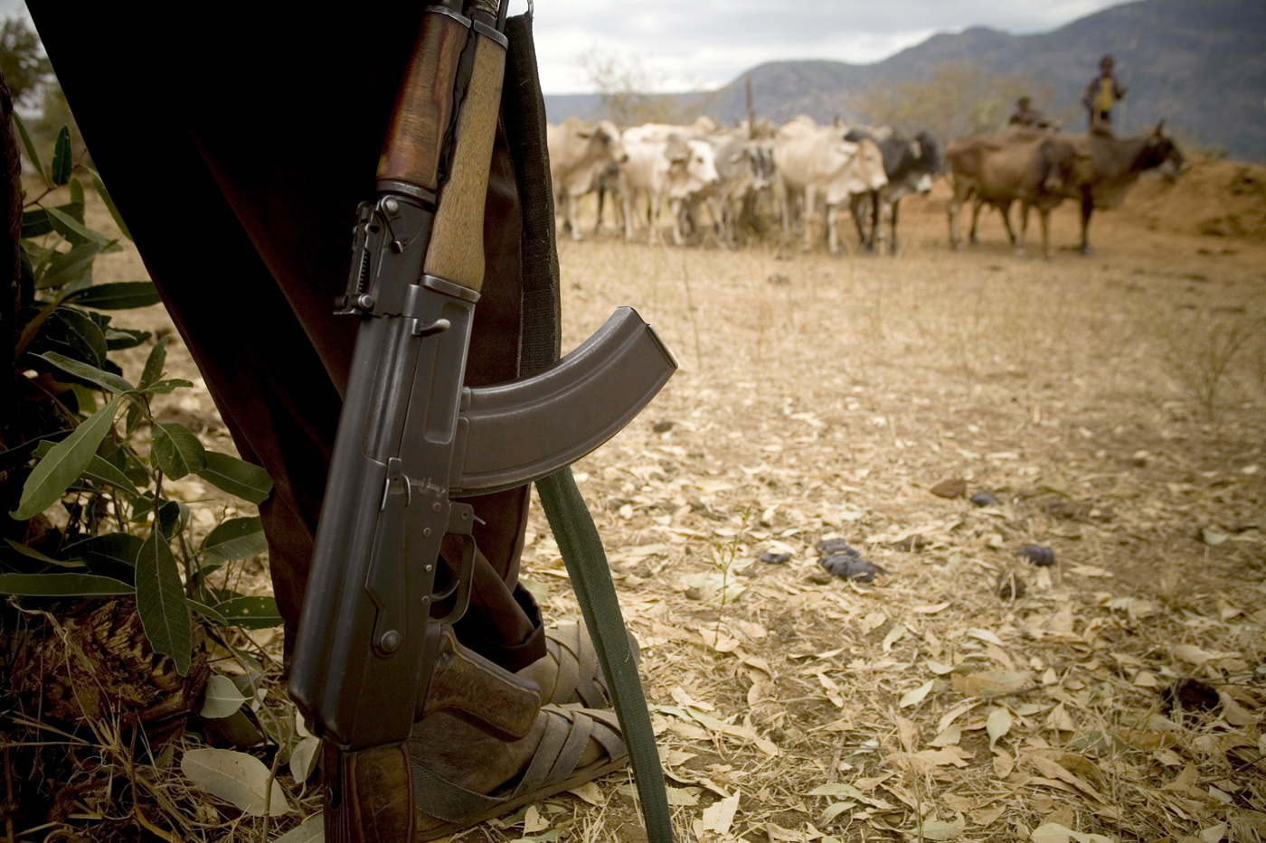 An armed herder looks after his cattle near the border town of Moyale, Kenya