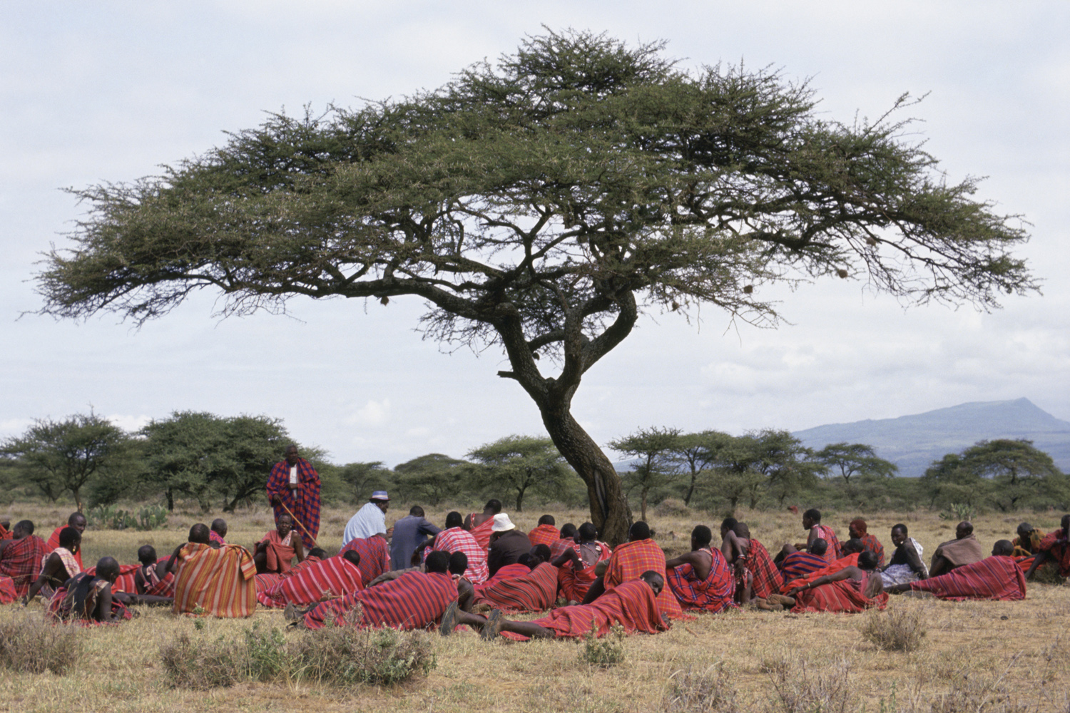 Maasai men meet under an Acacia tree for a community meeting