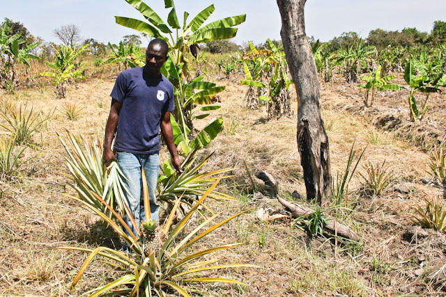 Baba Samuel Manoah stands in a cleared plot of land at his farm outside of Yei. Yei is in Central Equatoria State, South Sudan