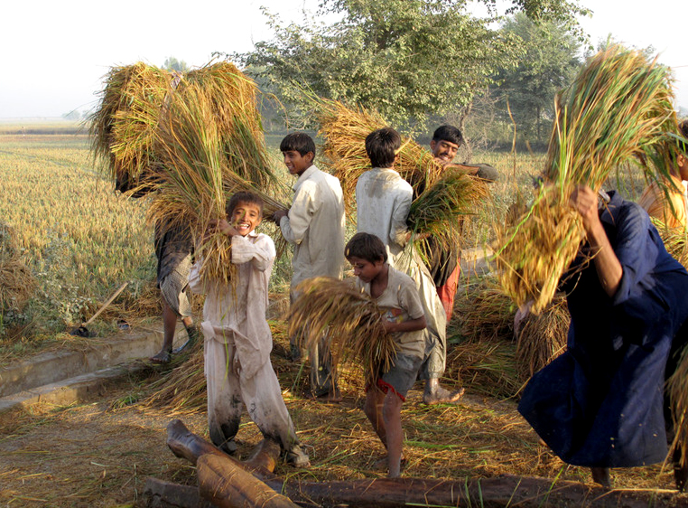 Tenant farmers threshing rice saved from flooded field in Dadu District, Sindh province