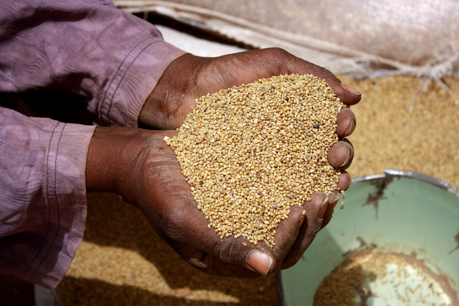 Millet is a staple food in Niger, March 2011
