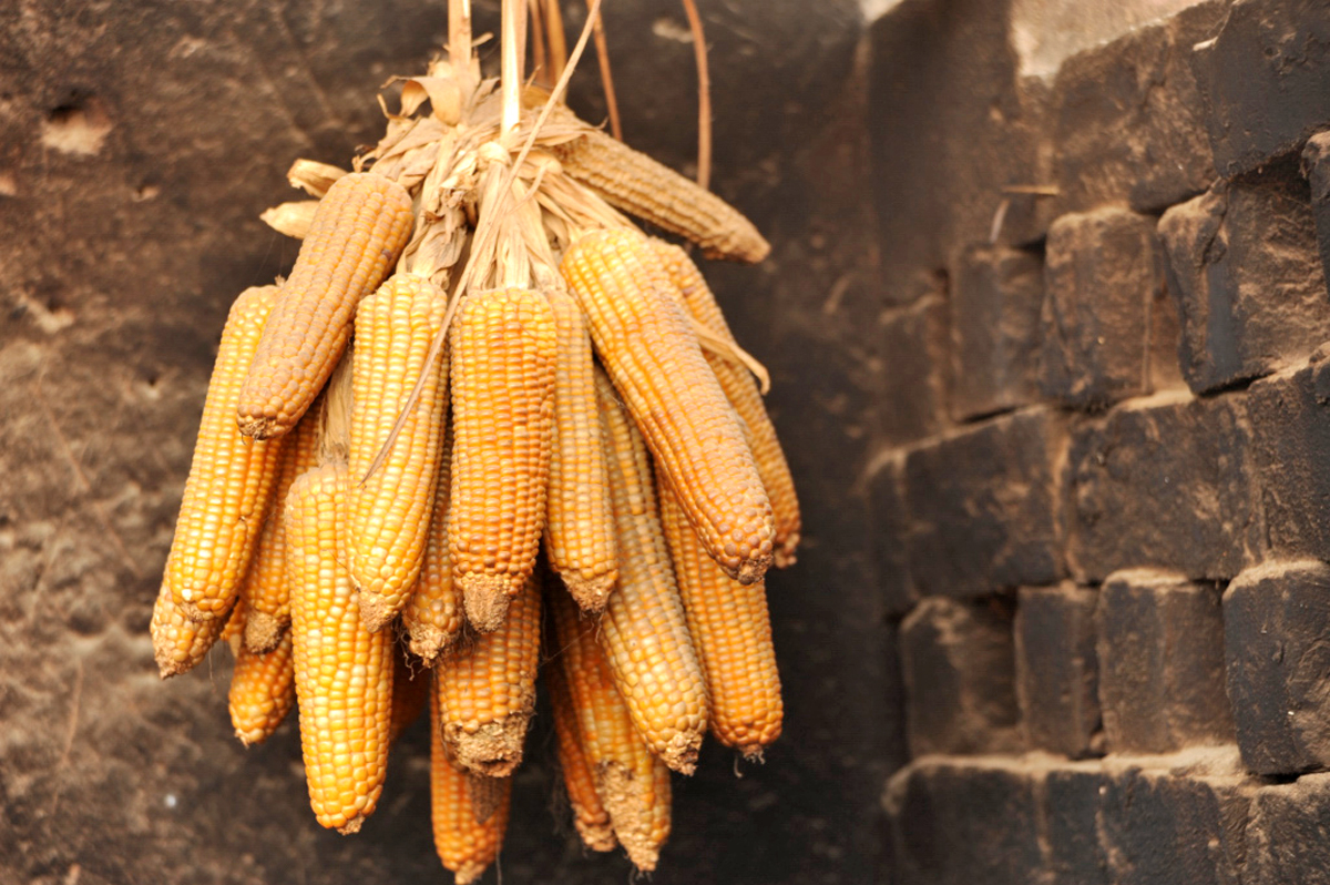 Maize hung up to dry in Madagascar