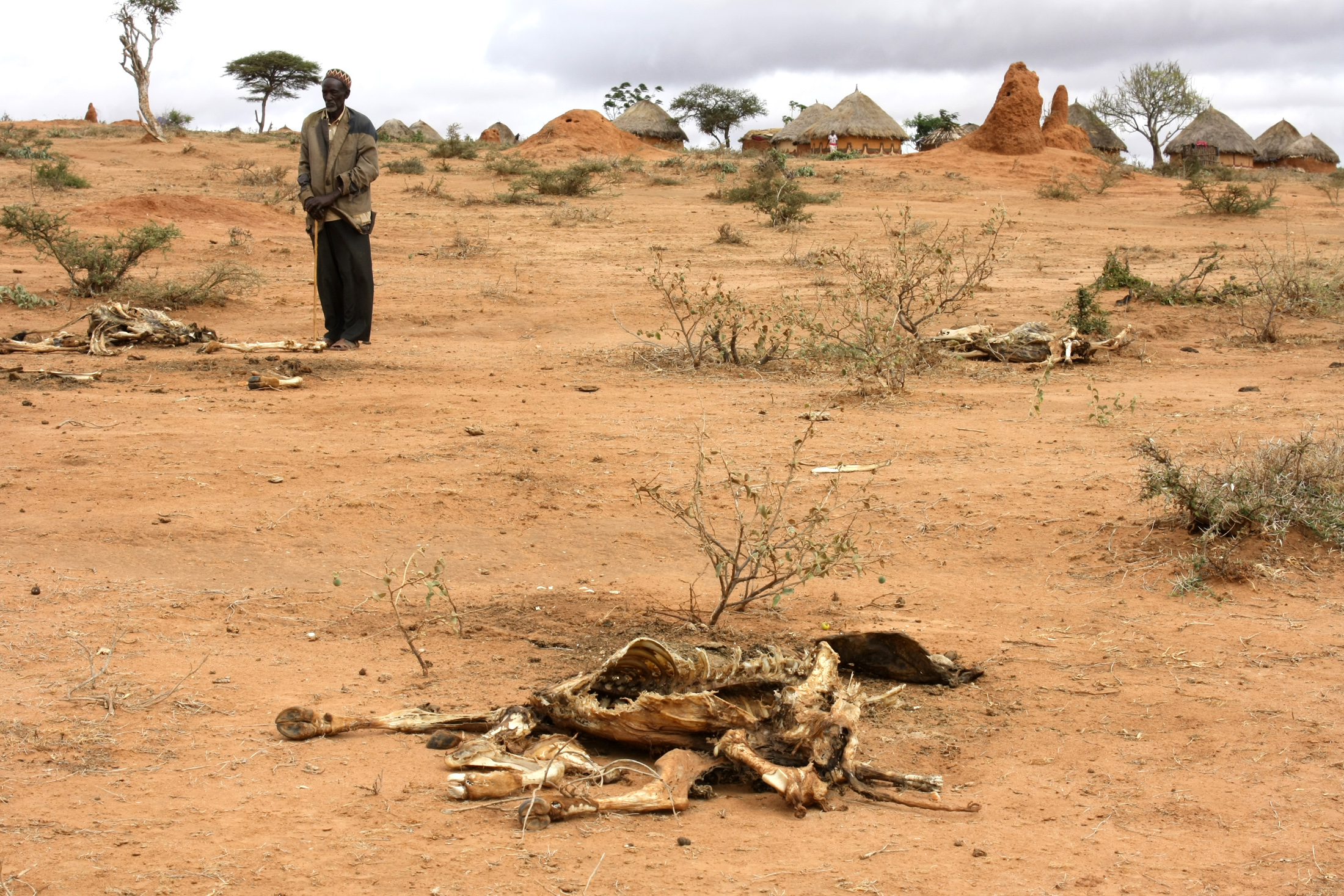 Carcasses lie outside villages in southern Borena in the Oromiya region, Ethiopia
