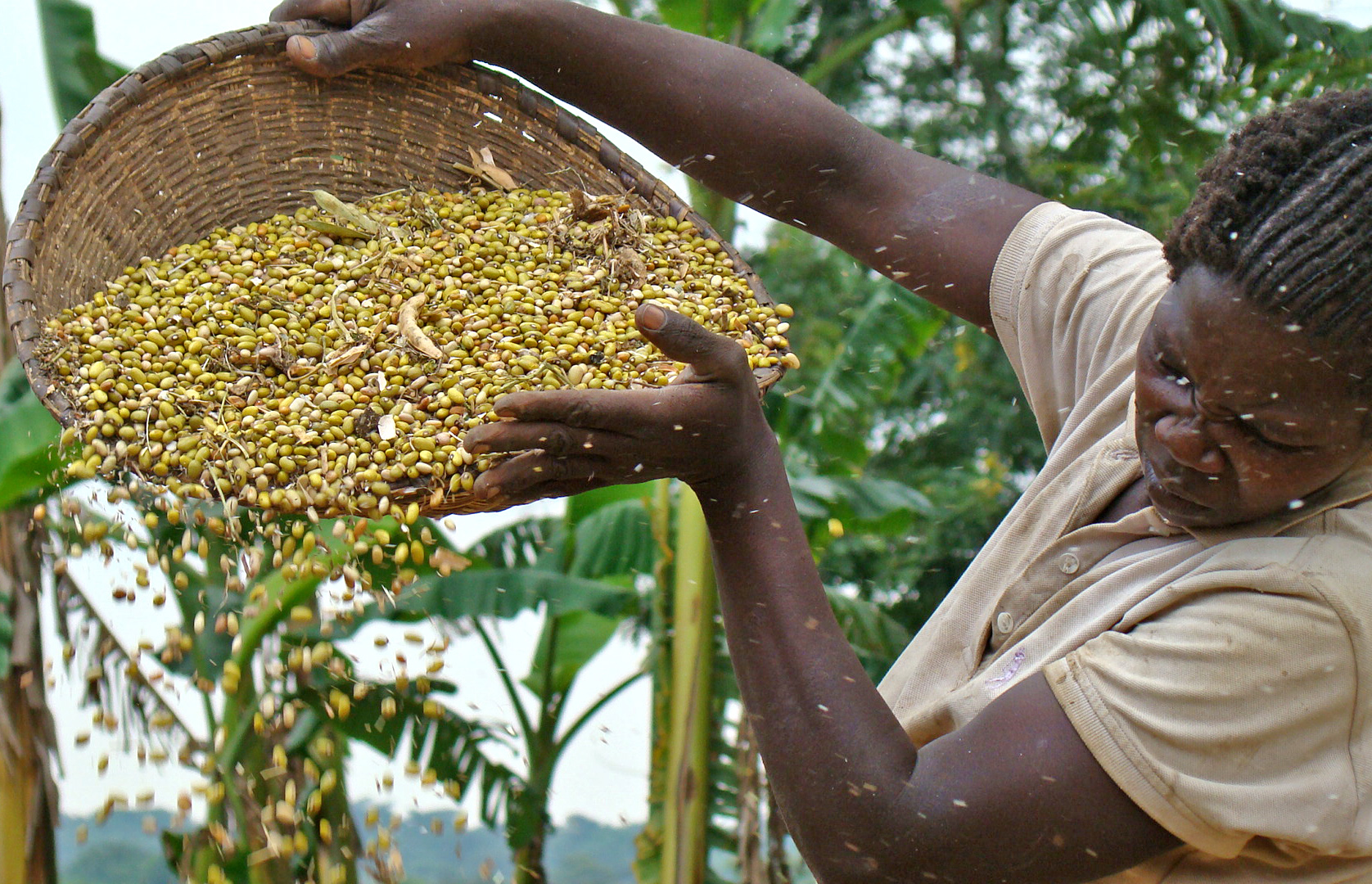 A farmer winnows her beans harvest in Nwoya district, Uganda