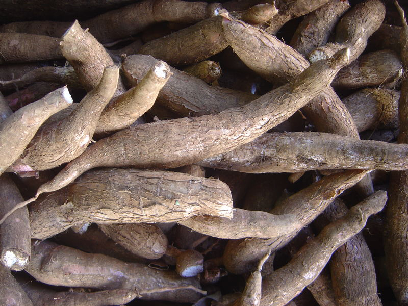 Cassava. For generic use