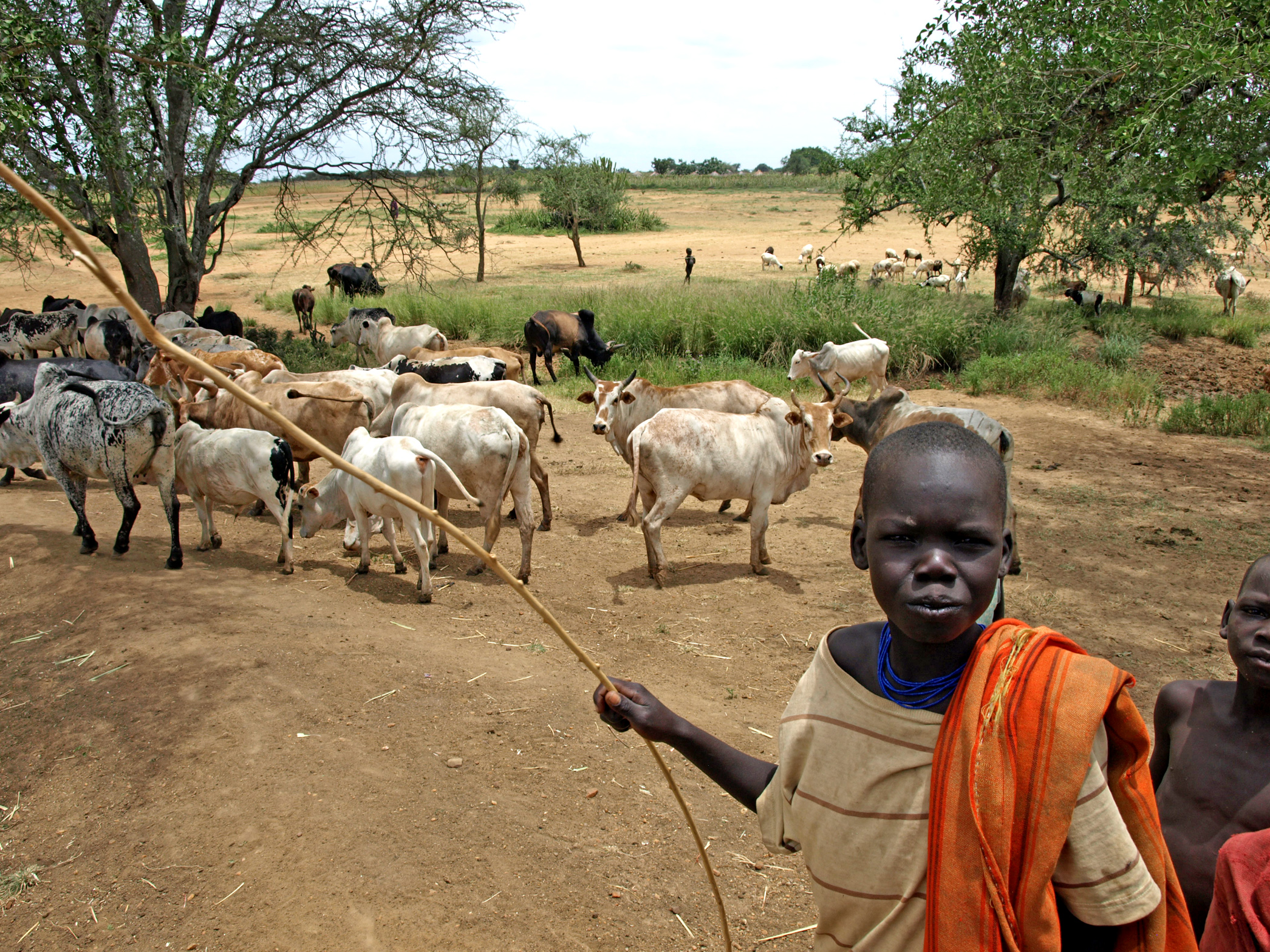 Domestic duties such as tending cattle keep many children in Uganda's Karamoha region out of school