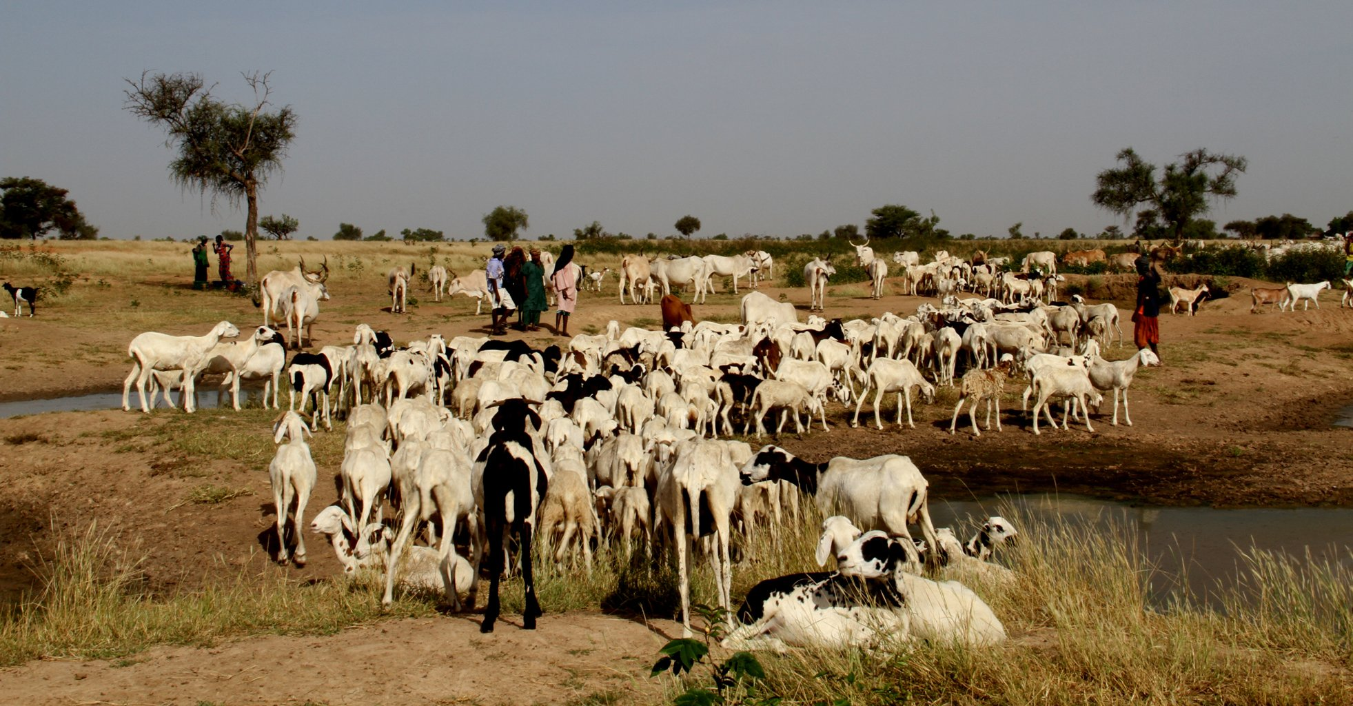 Fulani goat-herders in northern Senegal