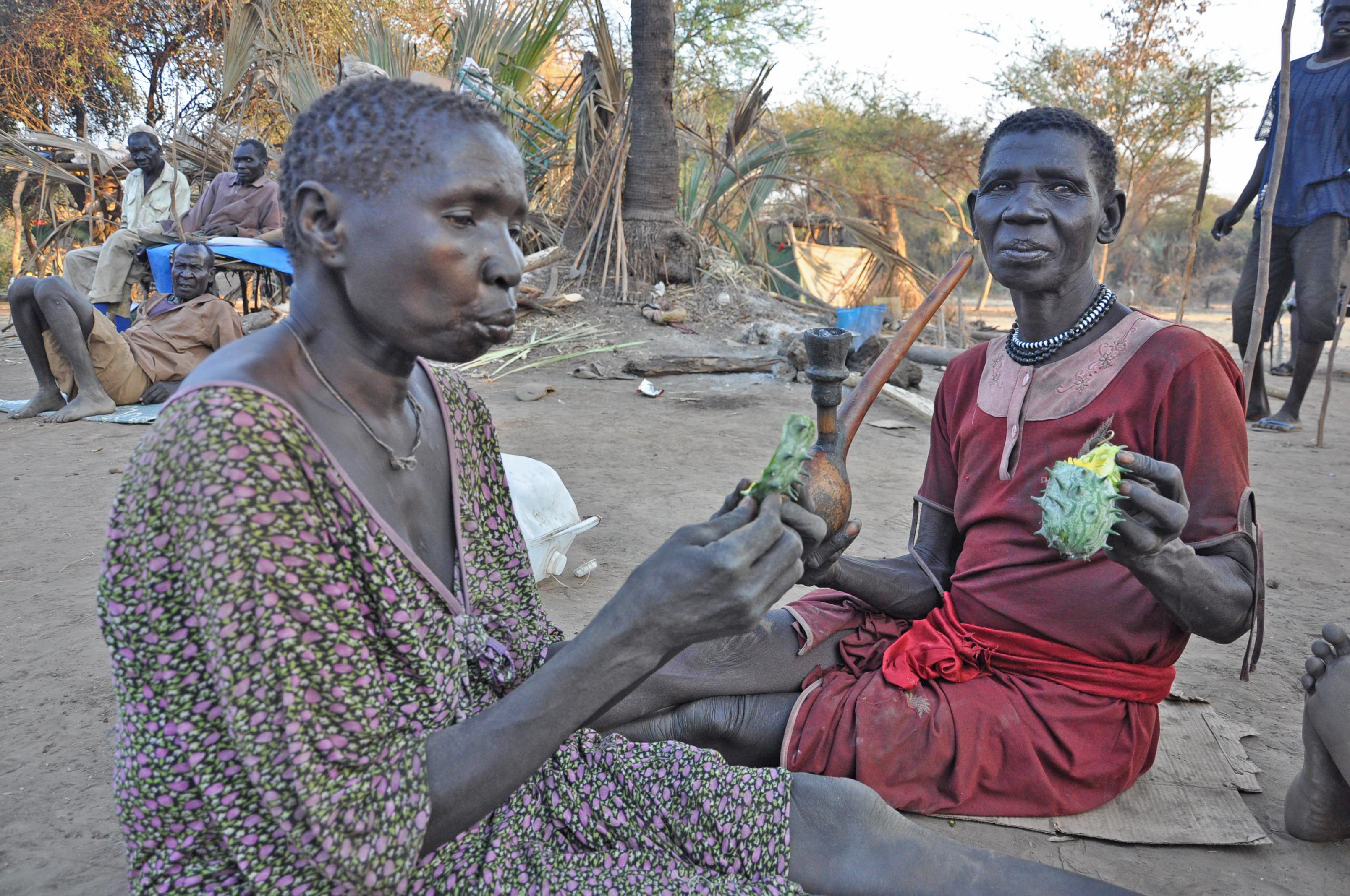 Refugees in South Sudan's Doro refugee camp supplement their diet with spiny cactus