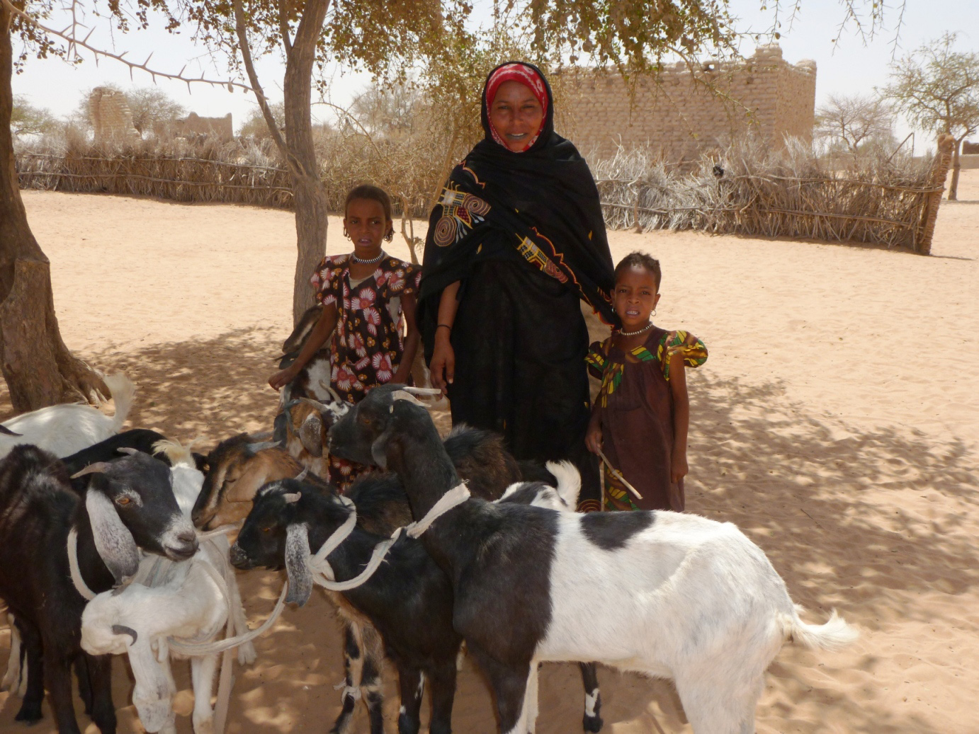 Women in Eri Toukoul village near Mao in Kanem Region, western Chad have received goats to help them get through the food crisis that they are currently experiencing. Recurring drought has killed off most of the animals in the village over recent years