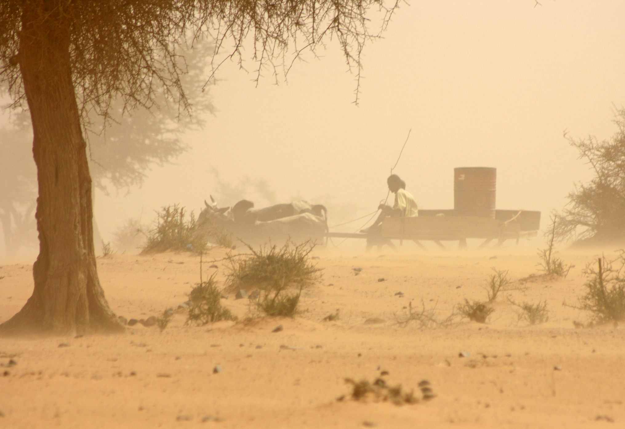 A man carts a precious drum of water through a sandstorm in Tillaberi region in southwestern Niger