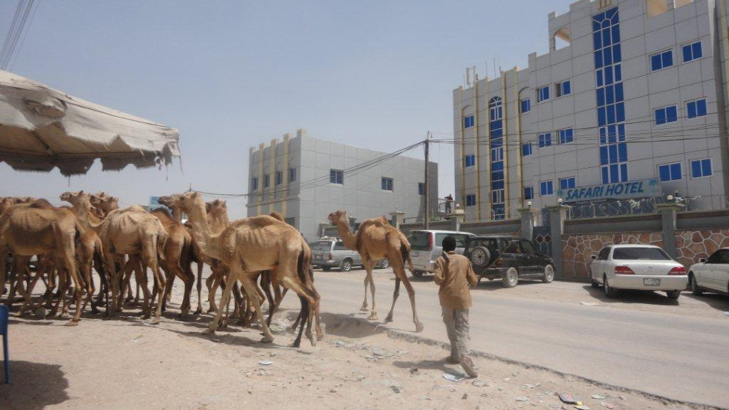 Pastoralists from the western regions of the self-declared independent republic of Somaliland, northwest Somalia, have migrated to the capital Hargeisa in the current drought