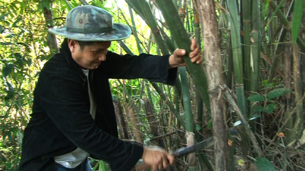 Kong, a villager from Na Po village in Sangthong district cuts bamboo from the local forest to produce furniture