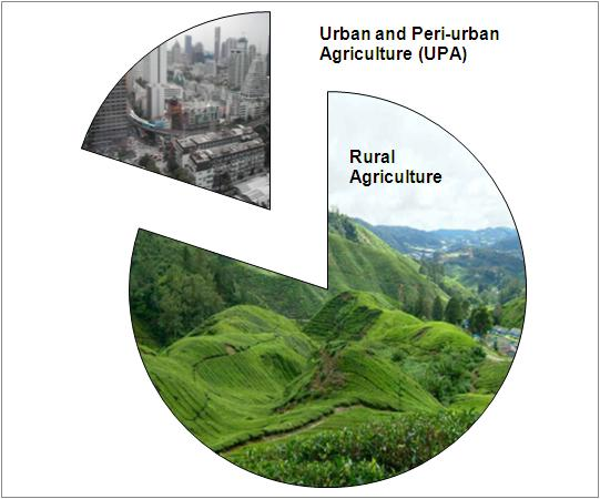Urban agriculture forms close to a fifth of the world's food production