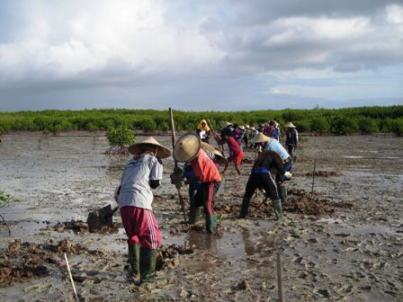 Village women digging a tidal creek to facilitate drainage of a waterlogged abandoned aquaculture ponds for ecological mangrove rehabilitation on Tanakeke Island, South Sulawesi