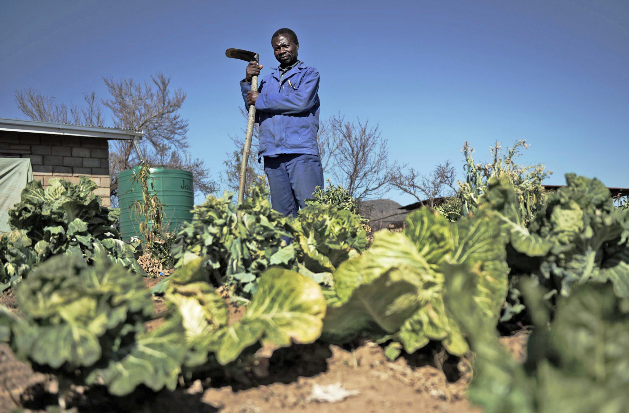 Moorosi Nchejana is one of 40 farmers in the village of Mabalane in Lesotho's Mohale's Hoek district who participated in a pilot programme by the UN's Food and Agriculture Organization to strengthen farmers' capacity to adapt to climate change  (J