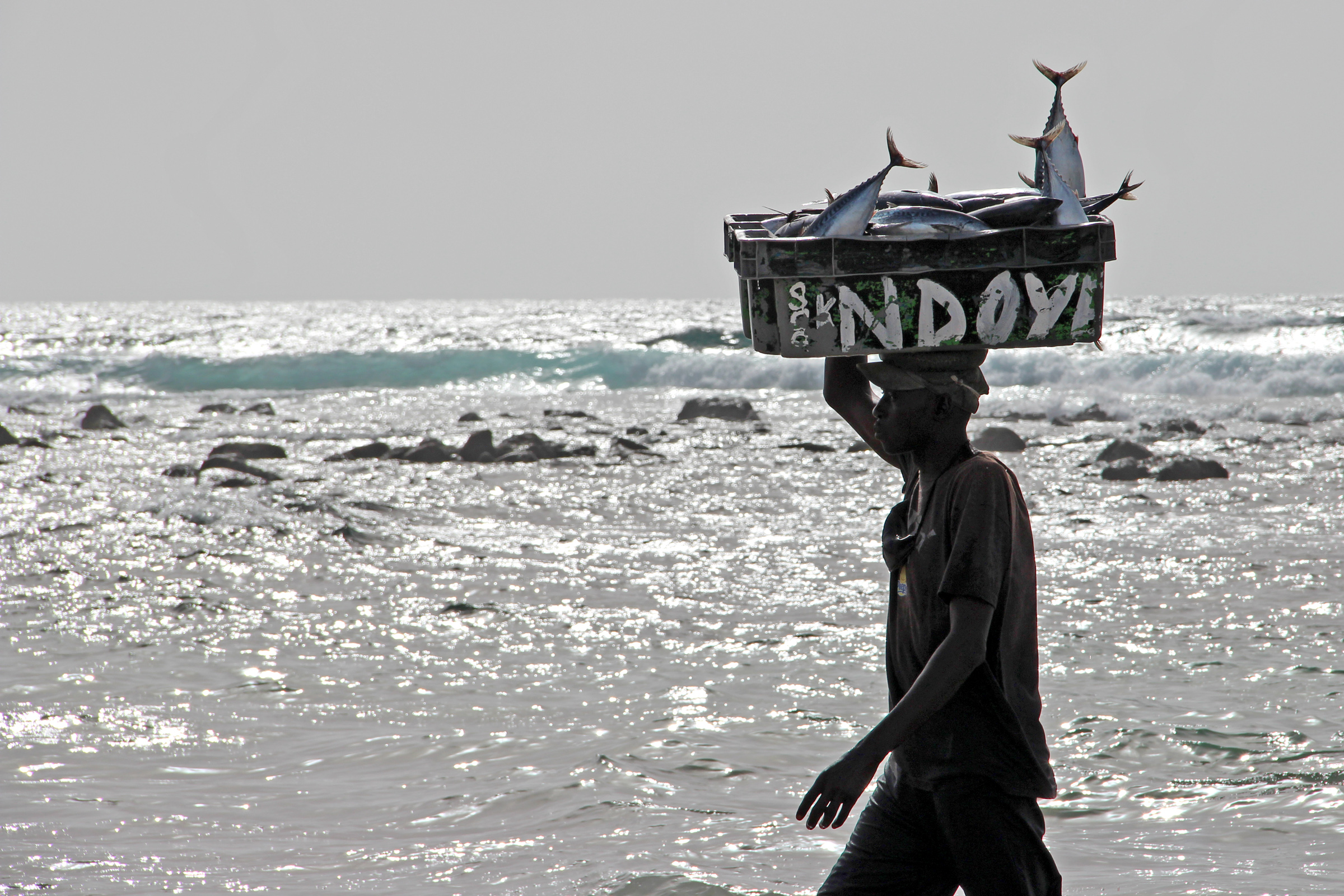 Senegalese fisherman carries a load of fish onshore. Local fishermen have protested that foreign vessels licence by the government are overexploiting fish resources, prompting authorities in May 2012 to revoke licences of 29 foreign fishing trawlers