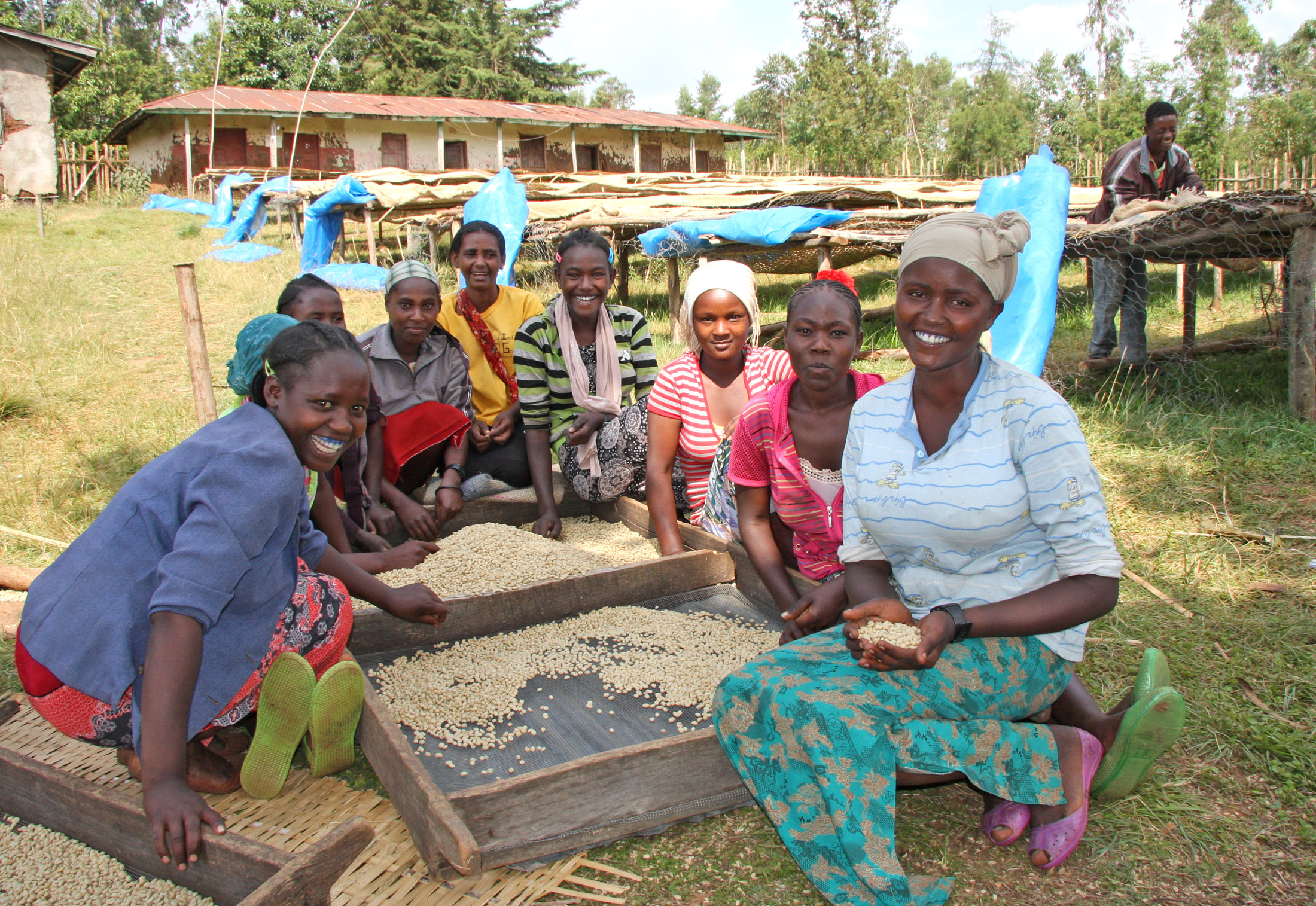 Ethiopian women in Addis Ababa sort through and pick out defective green coffee beans