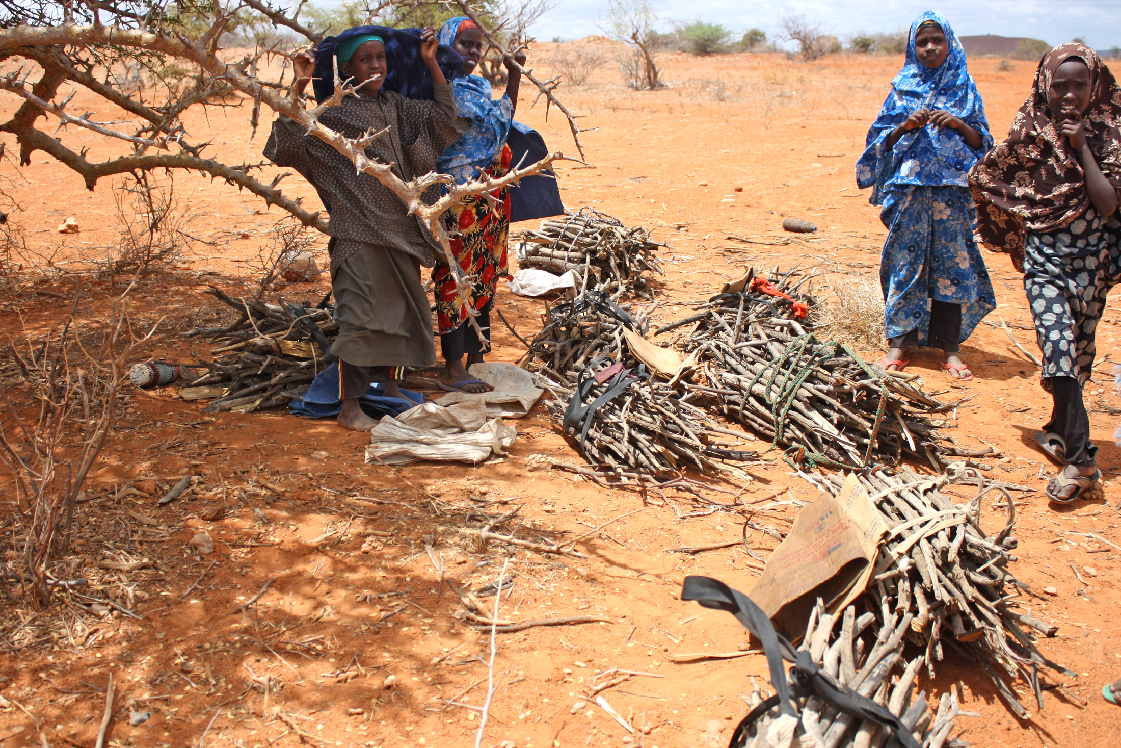 Somali refugees collecting firewood in Melkadida kebele in Ethiopia's Somali region
