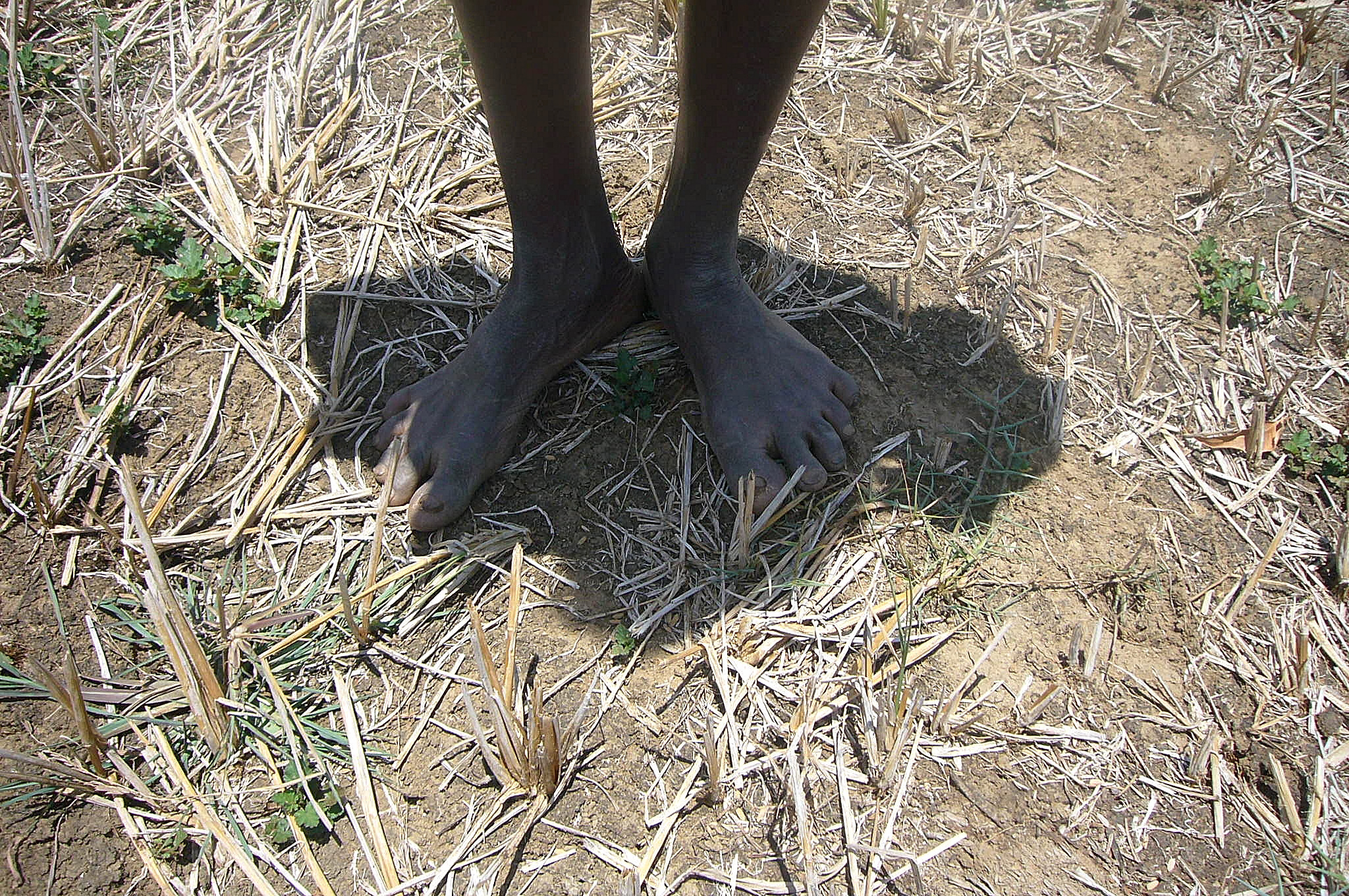 irin drought begins to bite in sri lanka a 10 month long drought left the northern and eastern regions of sri lanka
