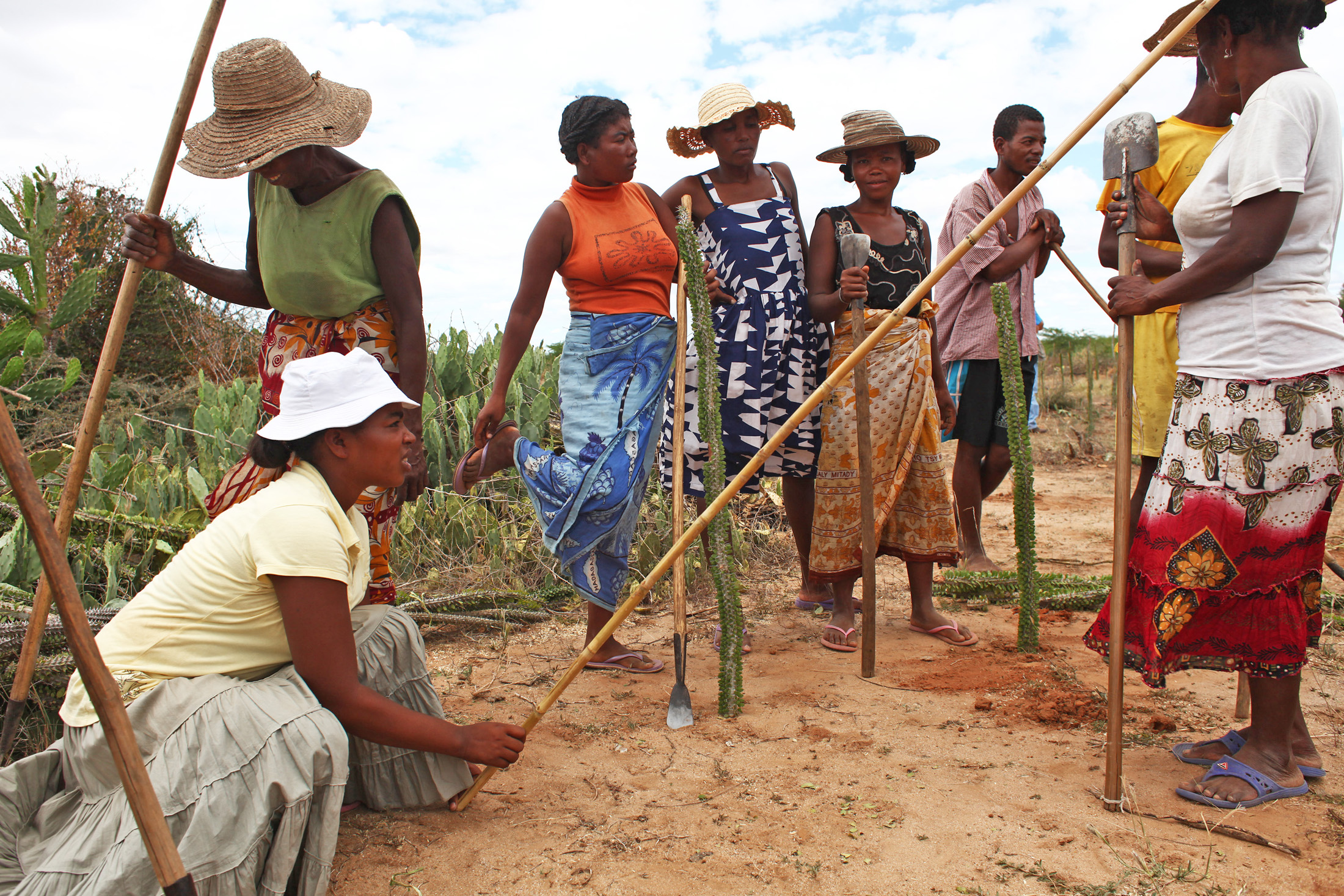 Villagers from Ankirikiriky in southern Madagascar are replanting deforested land in return for food rations from the World Food Programme