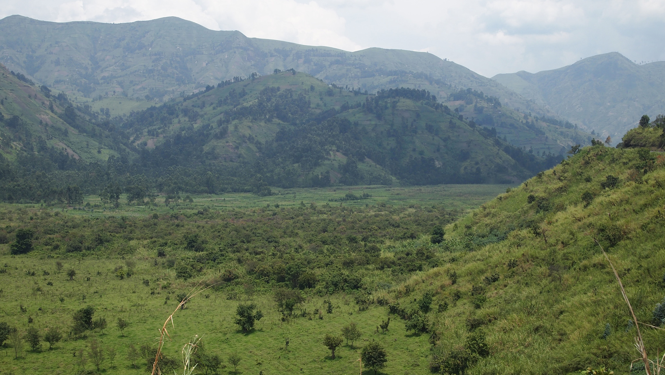 While agriculturalists eke out a living in the hills, this plain in Masisi has been taken for pasture