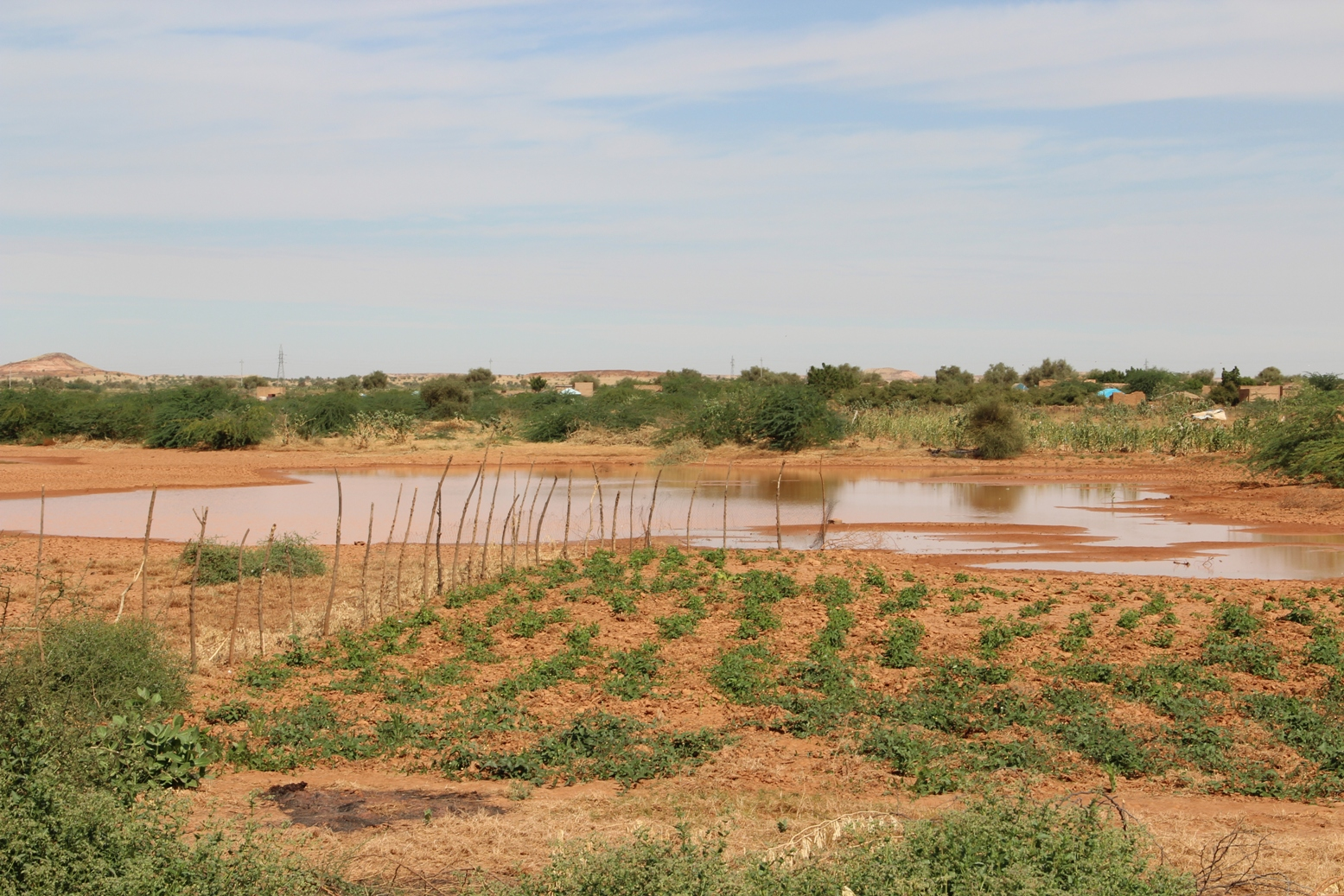 As of end of 2012 the harvest in Mauritania was far better than 2011 due to decent rains. Fields outside of Kaedi in the Gorgol region