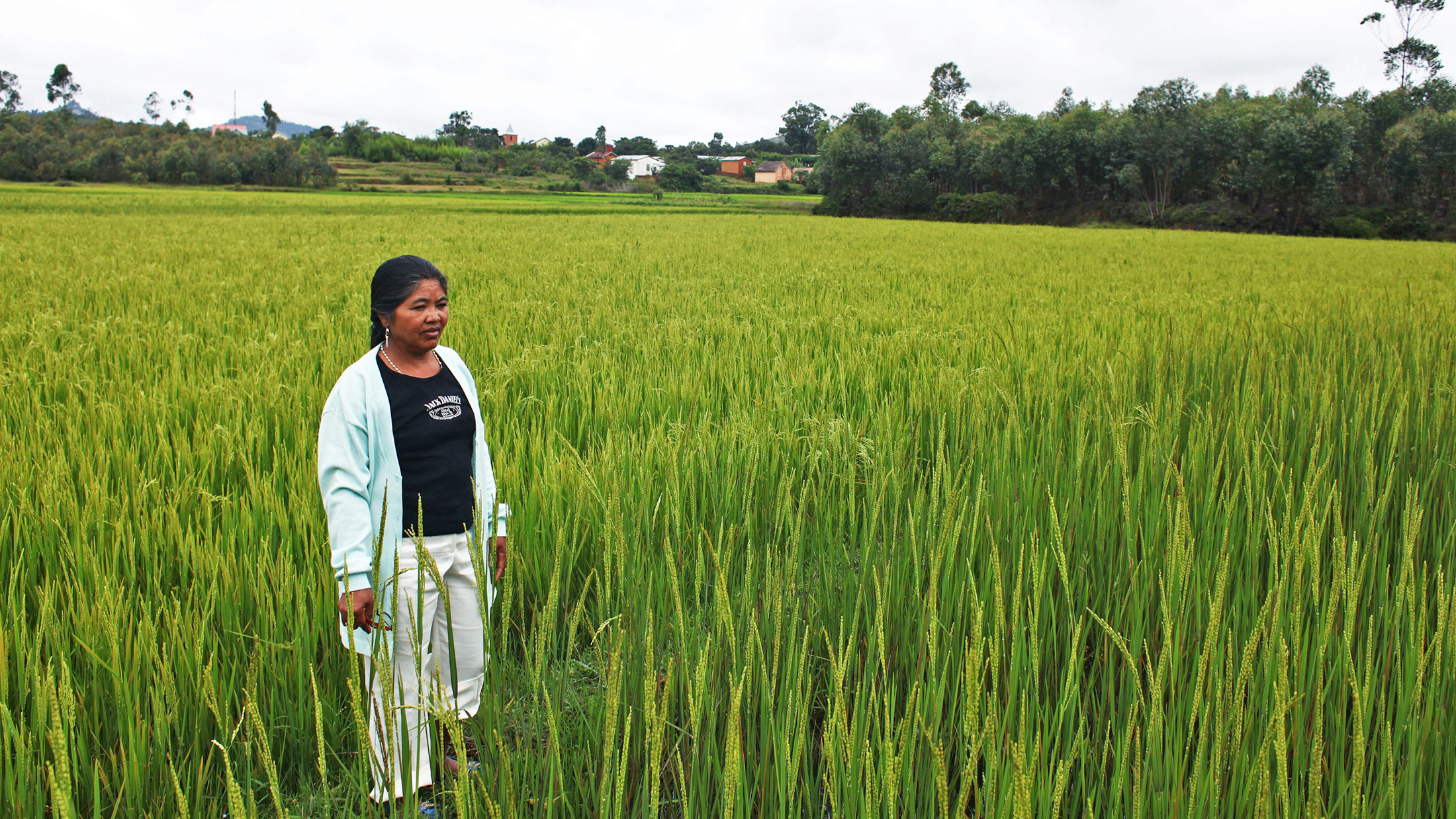 Rosalie Rabodozafy stands in her family's rice field in Sambaina Commune, west of Madagascar's capital, Antananarivo. Through the Millennium Villages Project, Rabodozafy's family has learned to plant rice according to the System of Rice Intensificat