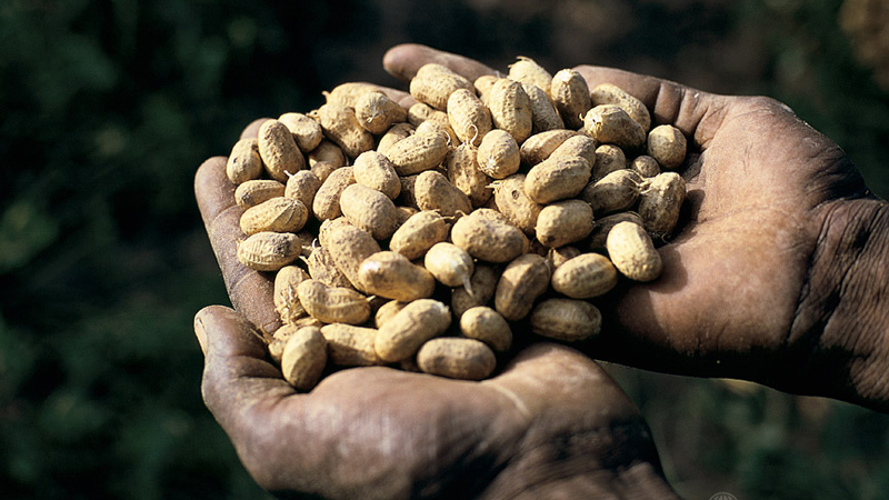 Handful of peanuts. Mali. For generic use
