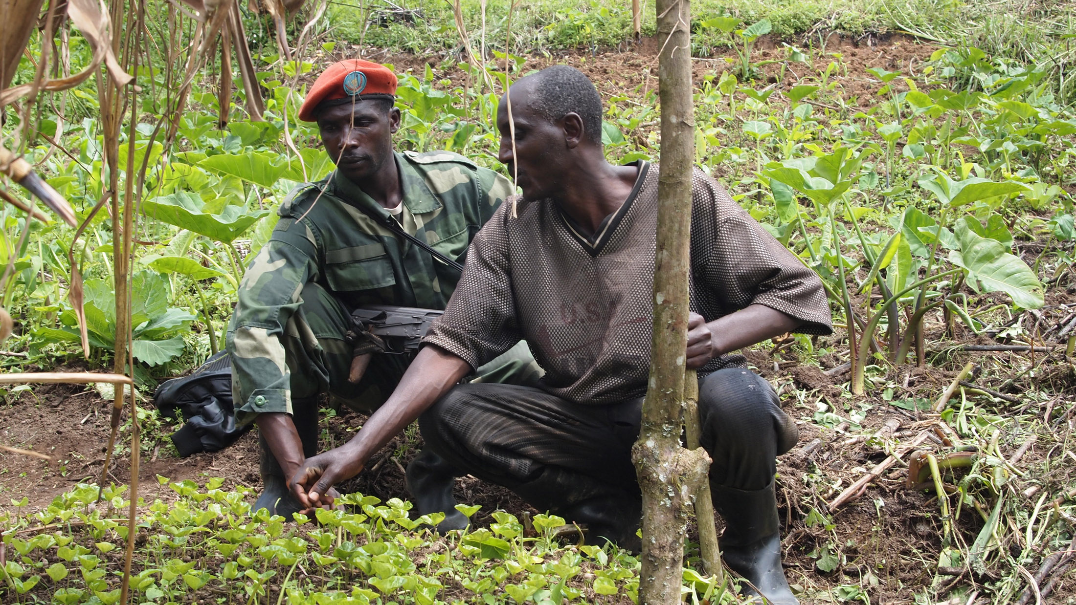 Militiaman with a farmer at a coffee plantation near Kalonge, on the borders of Masisi and Walikale territories in North Kivu