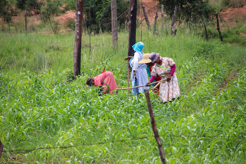 Almost 20 years later, small black farmers still rather marginalised