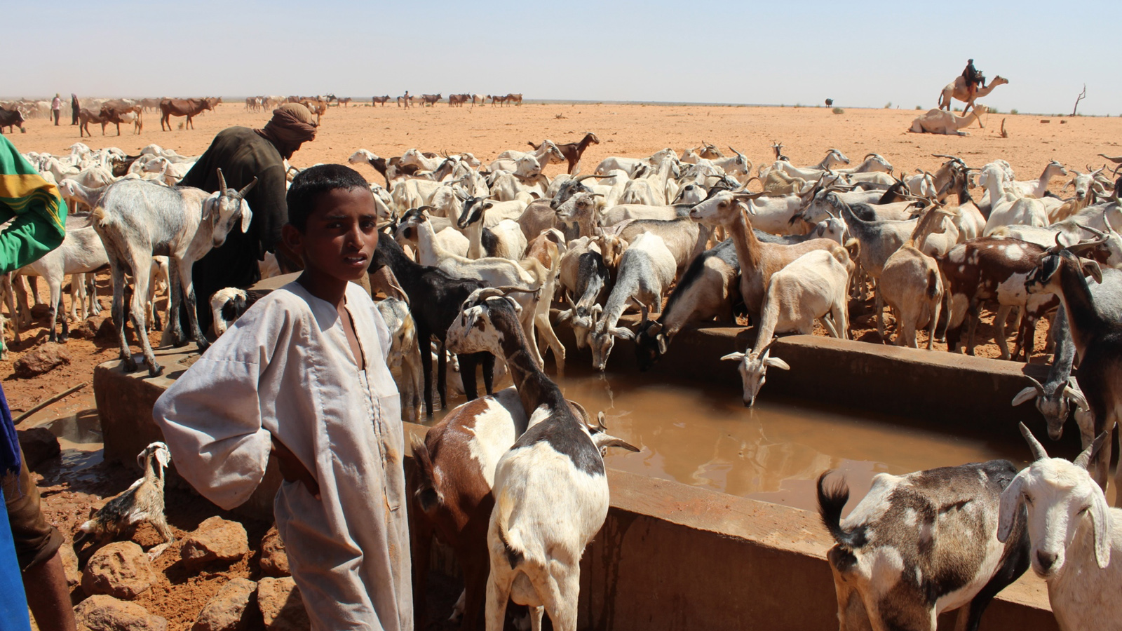 Nomadic refugees in Mbera camp welcome the livestock drinking reservoir