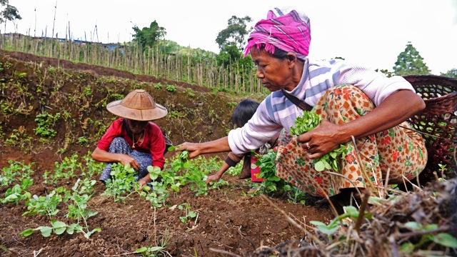 In the hills around the Nhkawng Pa IDP camp in Myanmar's northern Kachin State, camp residents learn the art of organic farming. More than 50,000 people remain displaced in KIA-controlled areas following the collapse of a 17-year-old ceasefire between gov