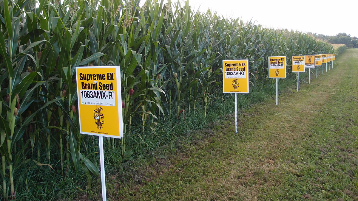 GMO corn in Yellow Springs, Ohio