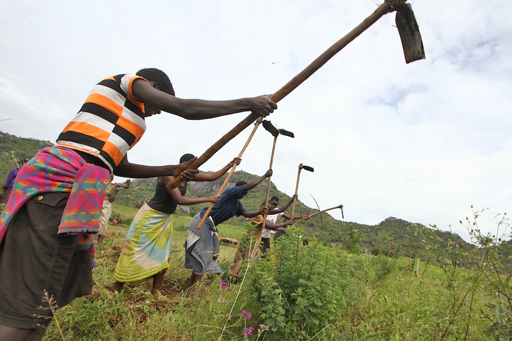 Communal gardening, Kaabong District in the Karamoja region, Uganda