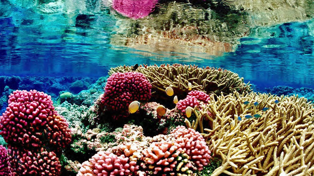 Coral reef. For generic use
