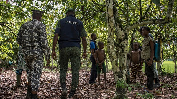 The International Criminal Police Organization (INTERPOL) rescues children, who have been the victims of child trafficking, from cocoa fields .
