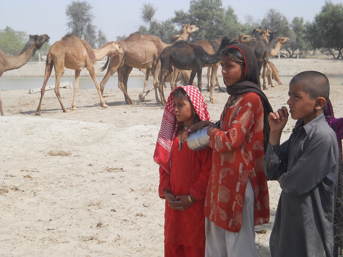 Children and livestock at a watering hole in January 2016 in Pakistan's Tharparkhar region, which has been hit be drought