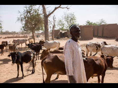 Humanitarian crisis in the Sahel