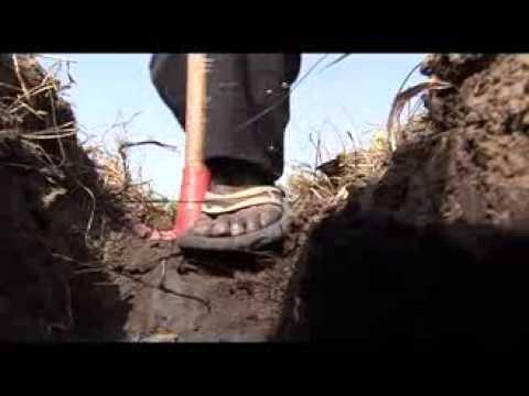 The Gathering Storm - Drip Irrigation