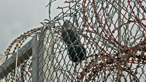 A shoe in barbed wire at the Turkey Greece border