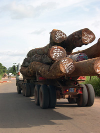 [Cote d'Ivoire] This truck is carrying wood, marked with official stamp. But in many of Cote d'Ivoire's forests illegal logging is continuing apace.