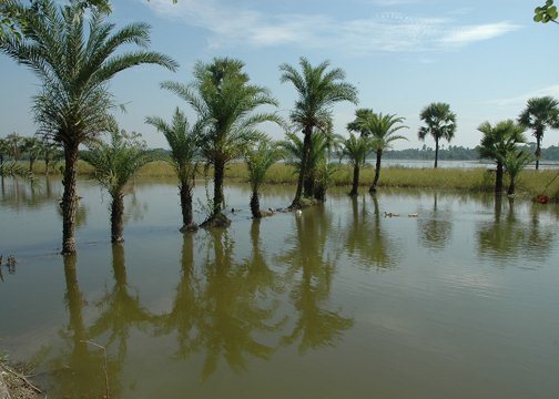 Saline sea-water engulfs rice fields in southern Khulna district.