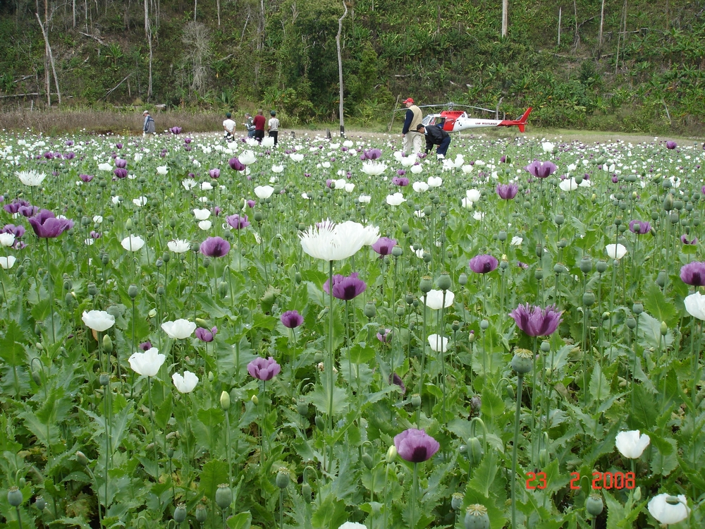 Significant strides have been made in Laos over the past two decades to dramatically reduce the cultivation of poppy and the production of opium