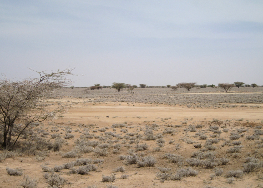 The terrain in drought stricken Lodwar