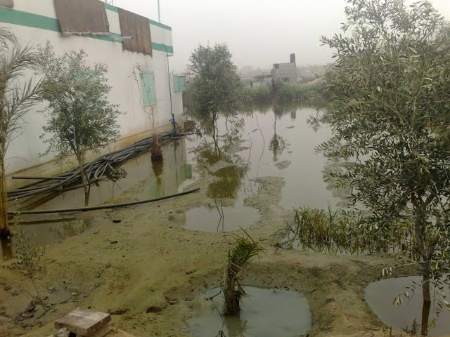 A farm of citrus, peach and olive trees in the Sheikh Ajleen area of Gaza City flooded with raw sewage after the Israeli operation