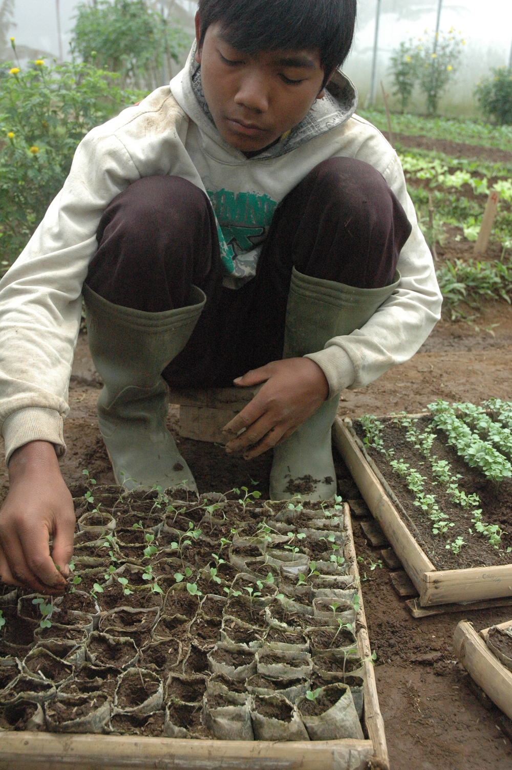 A boy takes care of shoots in the greenhouse at The Learning Farm in the lush hills of Indonesia's Puncak