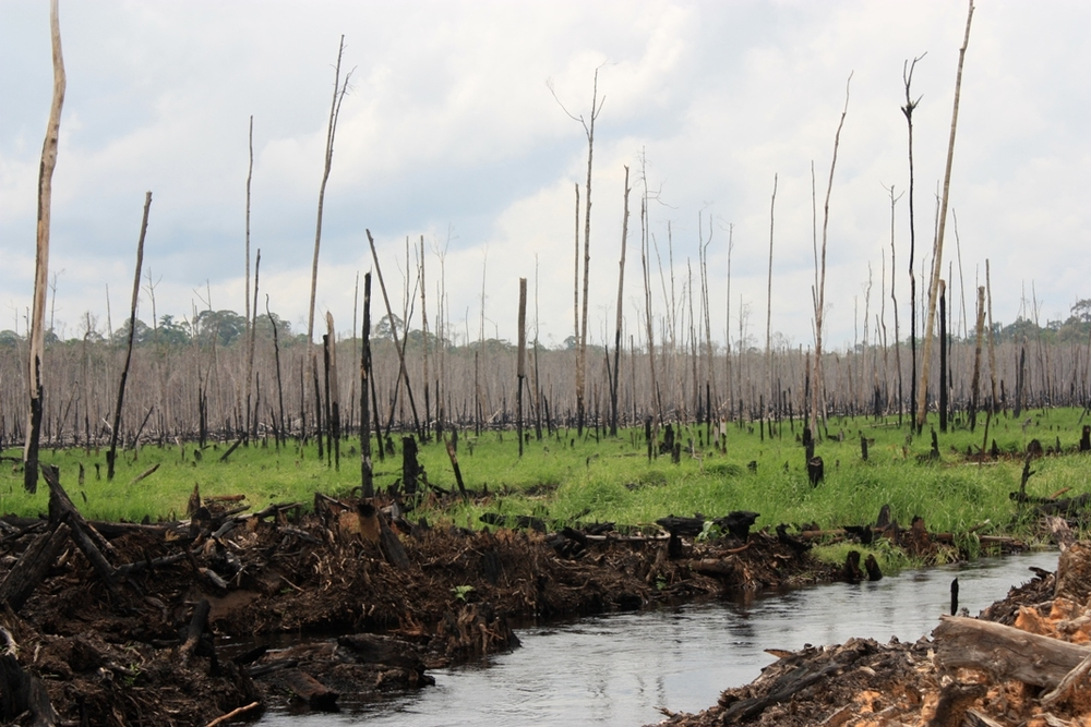 Indonesia is clearing its forests faster than any other country, Greenpeace says