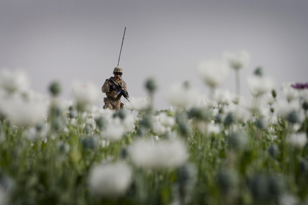 A Marine patrols through a poppy field in Mian Poshteh, Helmand Province